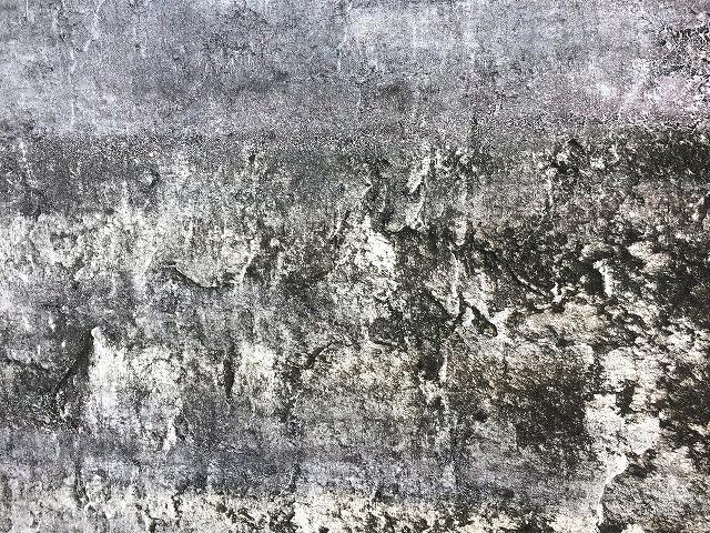 外部塀のカビ