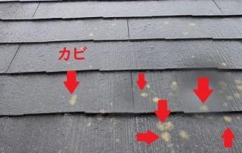 屋根カバー工法 カビ