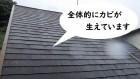 屋根カバー工法 劣化症状カビ