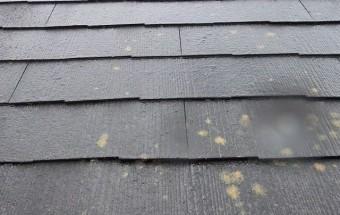 大屋根に生えた苔